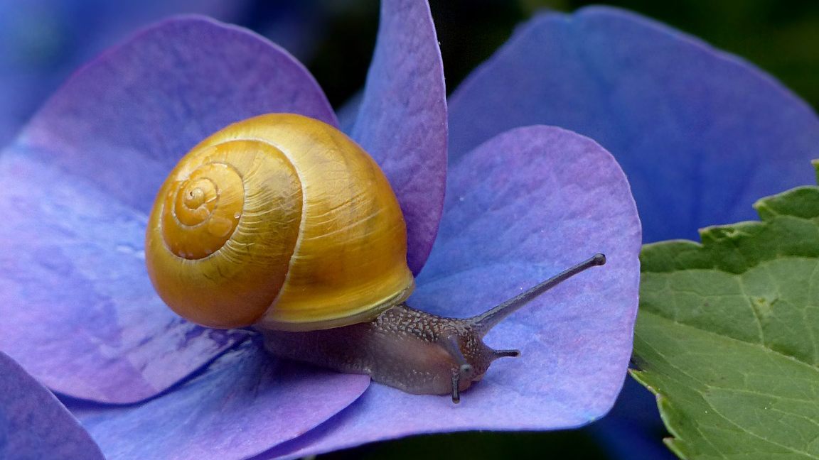 Snail Slime: A great makeover